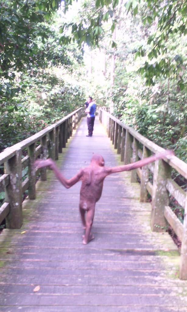 Solomon, sauntering down the path
