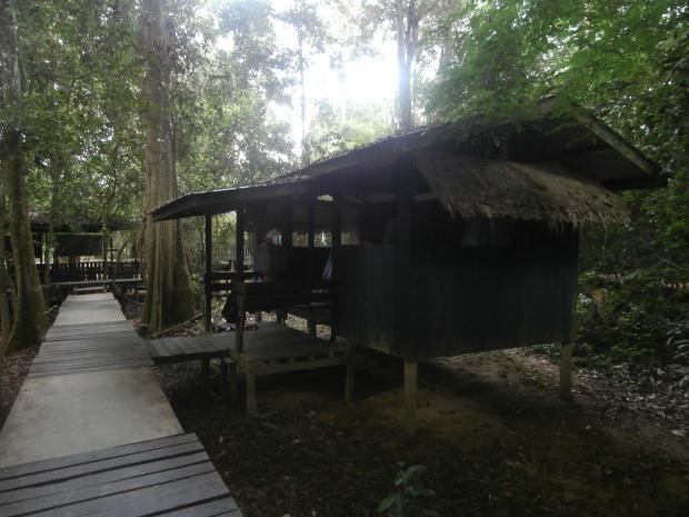 Our jungle hut