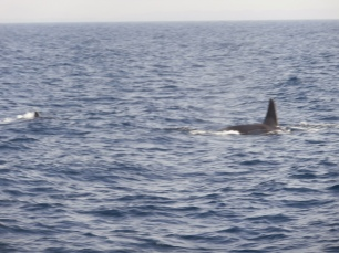 Whale watching mirissa